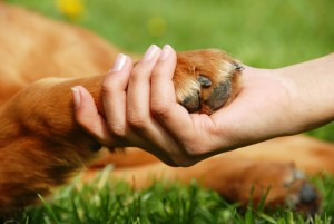 The Ability to Mourn – Learning From Animals