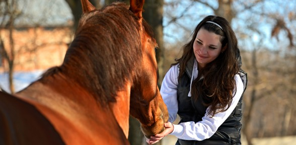The Answers Found in Nature – A Story About Horses