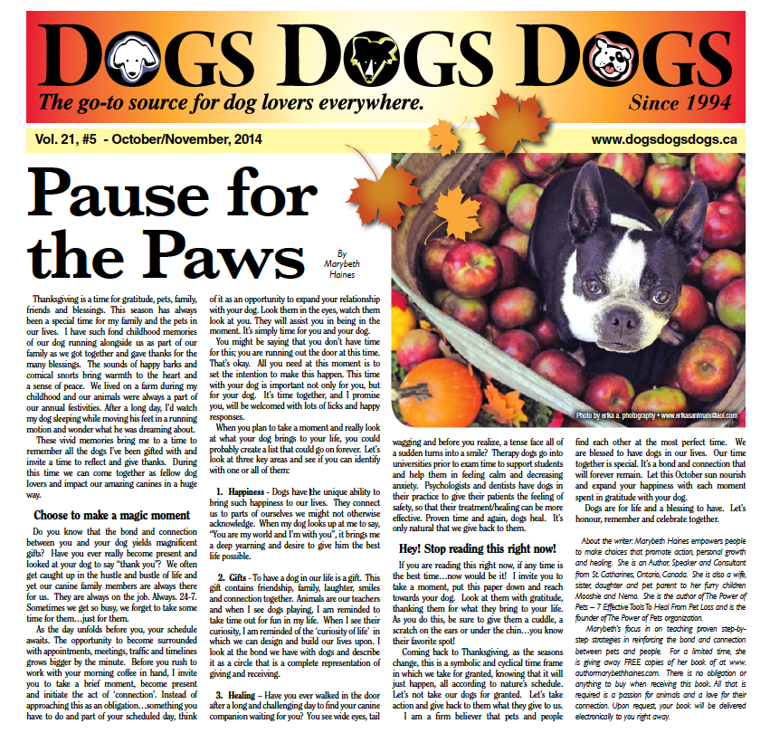 Dogs Dogs Dogs_Front Page Feature