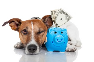 5 Steps to Save Money Without Cutting Corners in Pet Care